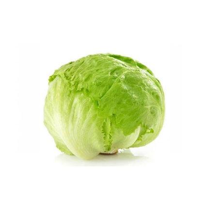 Picture of Capuchi lettuce