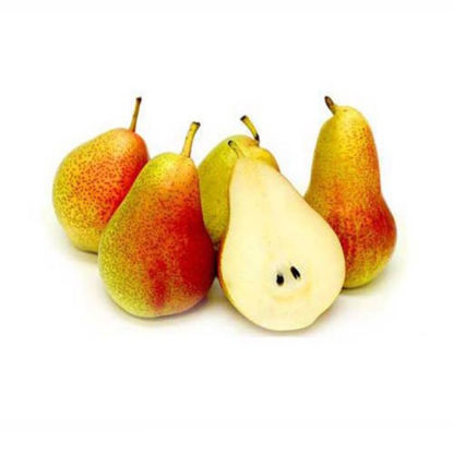 Picture of American pears